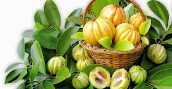 Garcinia Cambogia And Its Many, Powerful Health Benefits